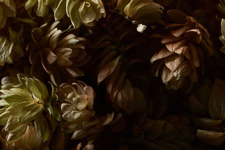 close up view of dry hops seed cones isolated on black background Stockfoto