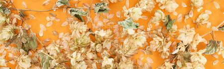 panoramic shot of scattered dry hops near petals on yellow background