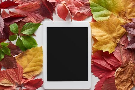 top view of digital tablet with blank screen framed with colorful autumn leaves of alder, maple and wild grapes on white background Archivio Fotografico - 133597992