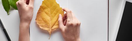 cropped view of female hands near yellow leaf of alder, blank notebook and digital tablet on white table, panoramic shot Archivio Fotografico - 133599365