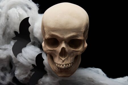 bats and spooky skull isolated on black, Halloween decoration Zdjęcie Seryjne