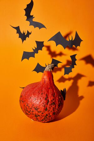 pumpkin and paper bats with shadow on orange background, Halloween decoration