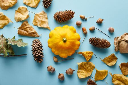 ripe whole colorful Pattypan squash and autumnal decor on blue background Stockfoto