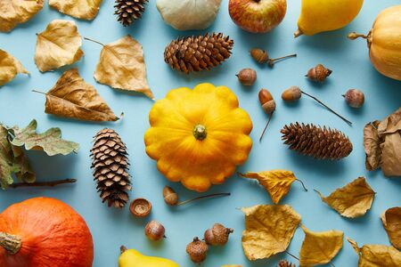 ripe whole colorful pumpkins and autumnal decor on blue background