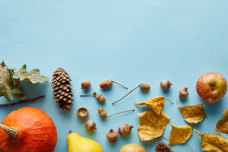 ripe whole colorful pumpkins and autumnal decor on blue background with copy space