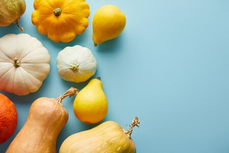 ripe whole colorful pumpkins on blue background with copy space