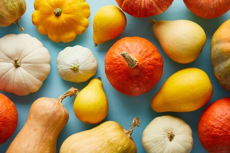 ripe whole colorful pumpkins on blue background