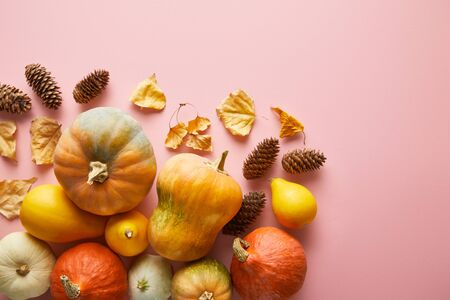 ripe whole colorful pumpkins and autumnal decor on pink background with copy space