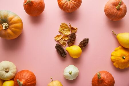 ripe whole colorful pumpkins and autumnal decor on pink background