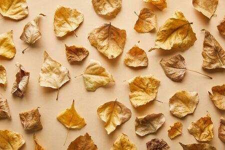 top view of dry golden foliage on beige background