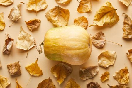 top view of ripe whole pumpkin with dry golden foliage on beige background Stockfoto