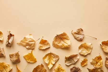 top view of dry golden foliage on beige background with copy space
