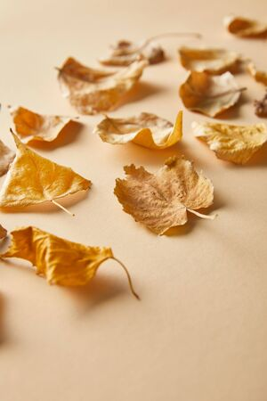 dry golden foliage on beige background with copy space
