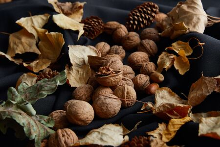 nuts, cones and dry foliage on black cloth
