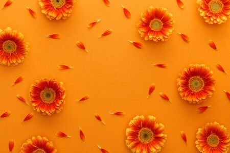 top view of gerbera flowers with petals on orange background