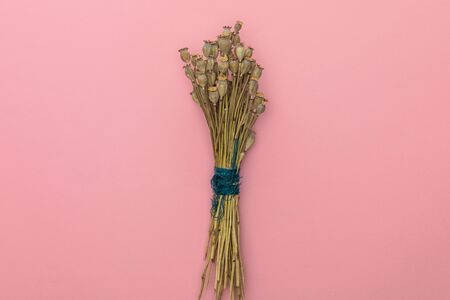 top view of dried poppy flowers on pink background