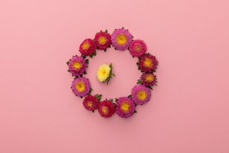 wreath of purple asters and one yellow inside on pink background 스톡 콘텐츠