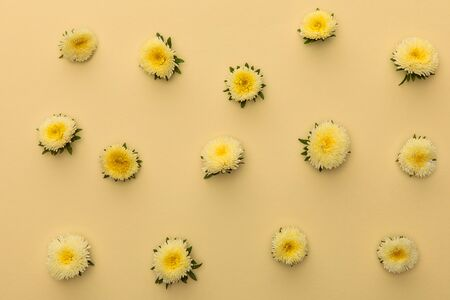 top view of yellow asters on beige background with copy space 스톡 콘텐츠
