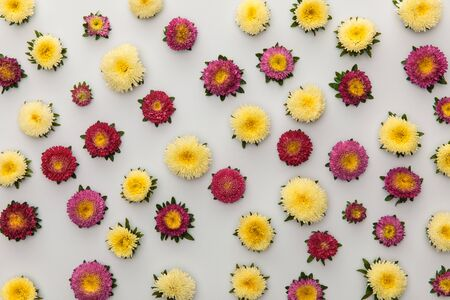 top view of yellow and purple asters on white background 版權商用圖片