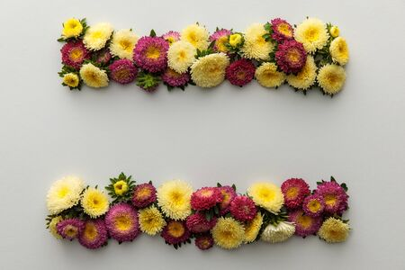 top view of yellow and purple asters on white background with copy space 版權商用圖片 - 133650248