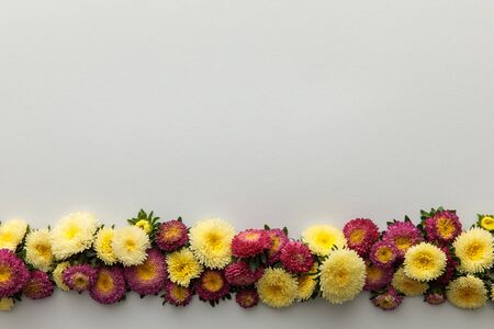 top view of yellow and purple asters on white background with copy space