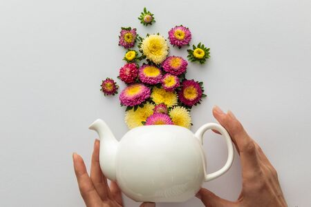 cropped view of woman holding teapot  near asters on white background