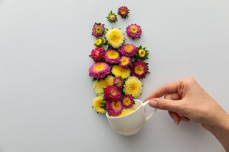 cropped view of woman holding cup with asters on white background