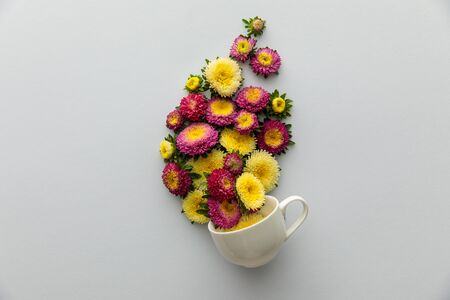 top view of asters in cup on white background 版權商用圖片 - 133650256