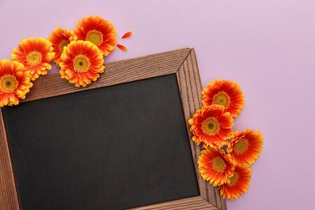 top view of orange gerbera flowers and blank chalkboard on violet background 스톡 콘텐츠