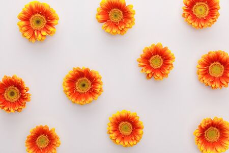 top view of orange gerbera flowers on white background