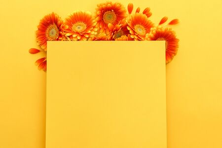 top view of orange gerbera flowers with petals with blank card on yellow background