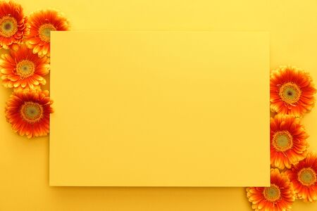 top view of orange gerbera flowers with petals and yellow card on yellow background 스톡 콘텐츠