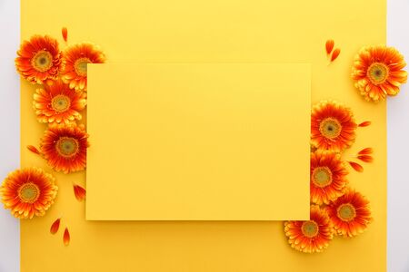 top view of orange gerbera flowers and blank paper on yellow background