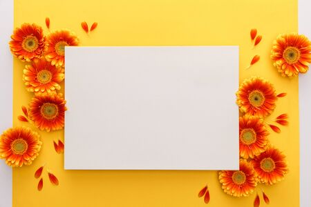 top view of orange gerbera flowers with petals and white blank card on yellow background 스톡 콘텐츠