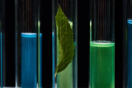 close up view of glass test tubes with leaf and liquid isolated on black Imagens