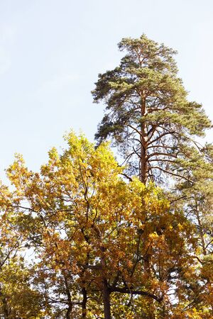 trees with yellow and green leaves in autumnal park at day 版權商用圖片
