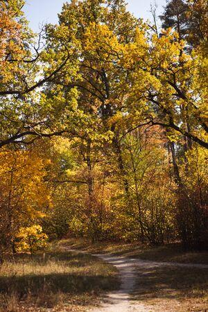 pintoresco bosque otoñal con follaje dorado y sendero en la luz del sol Foto de archivo