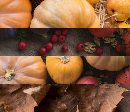 collage of ripe pumpkins and dry autumnal leaves, Thanksgiving decoration