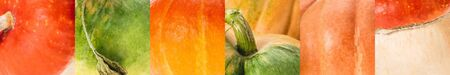 collage of ripe orange and green natural pumpkin
