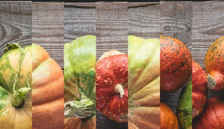 collage of ripe orange and green pumpkin on wooden table Reklamní fotografie