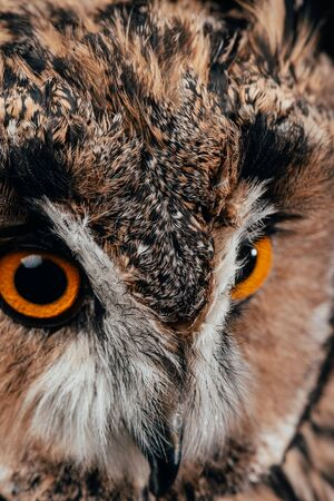 close up view of cute wild owl muzzle