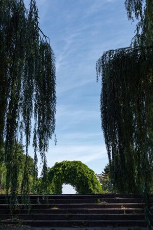 Arch of wild grape on stairs between willow trees with sky at background