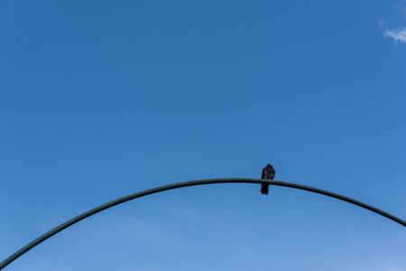 Low angle view of pigeon on arch with blue sky at background Stock Photo