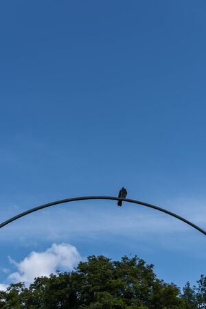 Low angle view of pigeon on arch with blue sky and trees at background Stock Photo