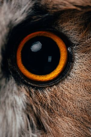 close up view of wild owl orange and black eye
