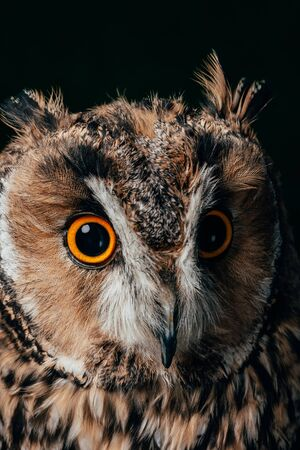 close up view of wild owl muzzle isolated on black Stok Fotoğraf