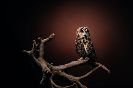 cute wild owl sitting on wooden branch on dark background