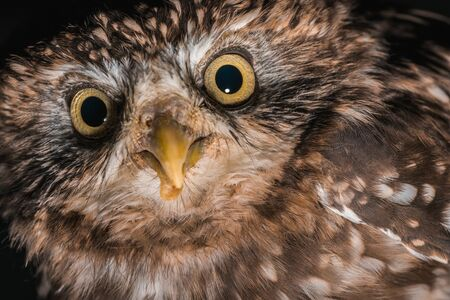 close up view of brown cute wild owl isolated on black