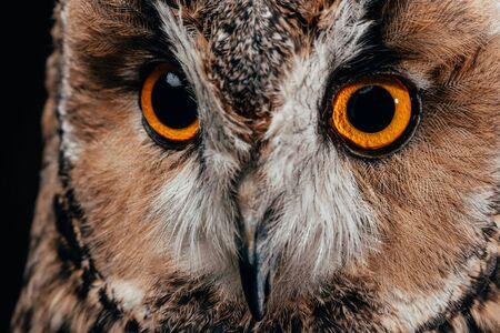 cute wild owl muzzle isolated on black 写真素材