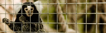 panoramic shot of marmoset monkey near cage in zoo